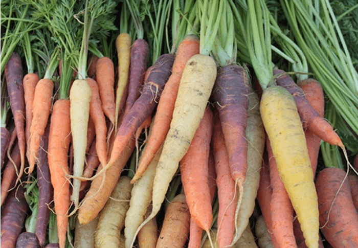 Seeds of Change® Organic Colorful Carrot Blend Seeds plant