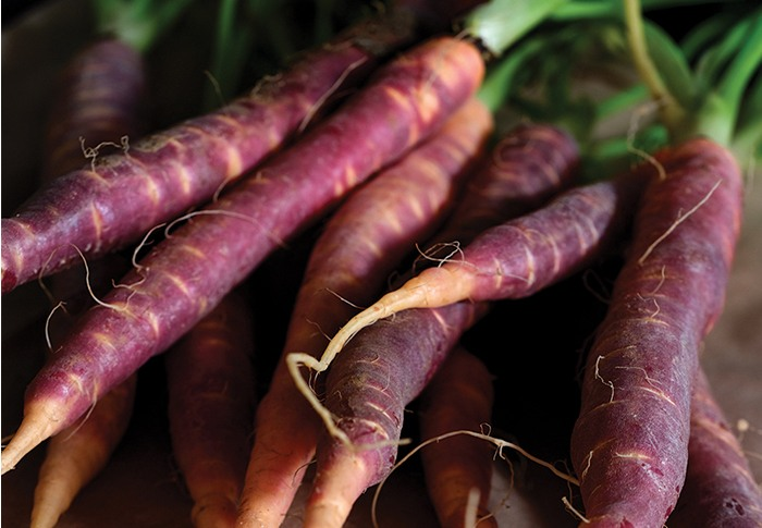Seeds of Change® Organic Purple Carrot Seeds plant