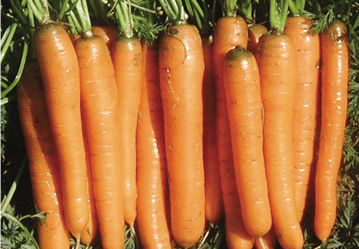 Seeds of Change® Organic Yaya Carrot Seeds plant