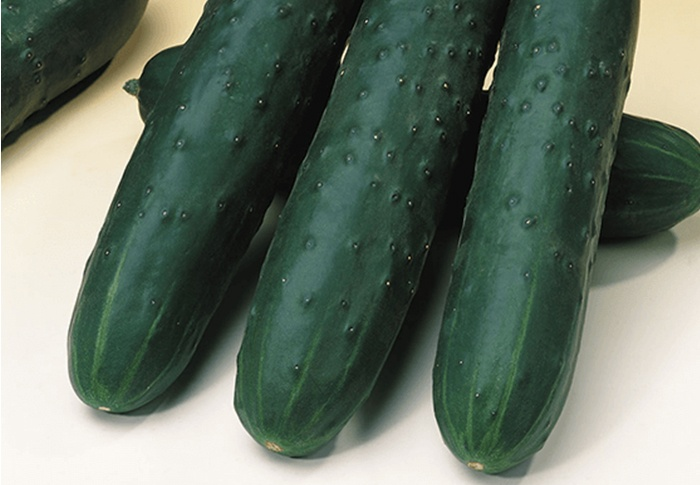 Seeds of Change® Organic Akito Cucumber Seeds plant