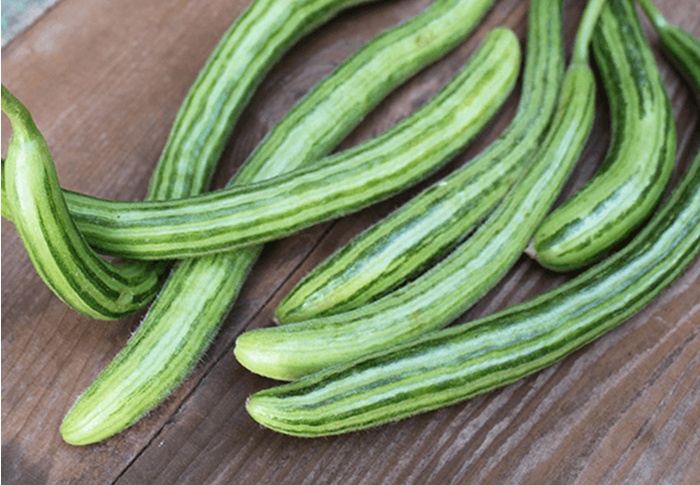 Seeds of Change® Organic Painted Serpent Cucumber Seeds plant
