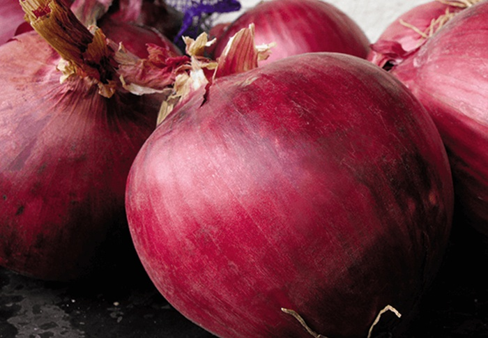 Seeds of Change® Organic Redwing Onion Seeds plant