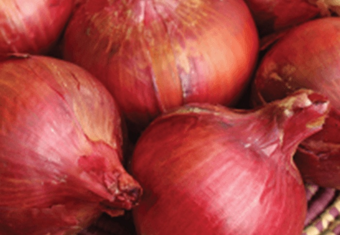 Seeds of Change® Organic Southport Red Globe Onion Seeds plant