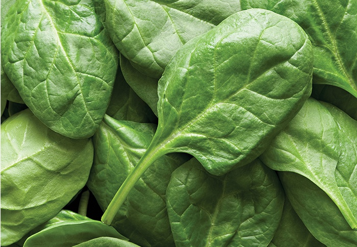 Seeds of Change® Organic Renegade Spinach Seeds plant