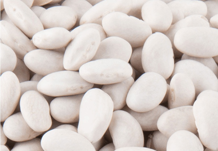 Seeds of Change® Organic Great Northern Bean Seeds plant