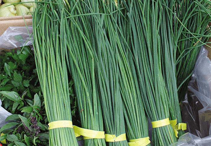 Seeds of Change® Organic Nelly Chive Seeds plant